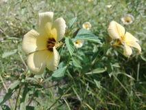 Желтые тропические цветки в саде стоковое фото rf