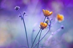 Желтые цветки в мадженте Стоковая Фотография RF