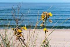 Желтые цветки в песке на пляже стоковое фото rf