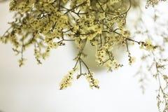 Желтые цветки в предпосылке вазы стоковое фото