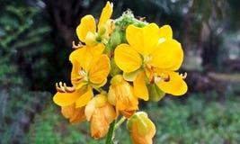 Желтые цветки в саде Стоковое Фото