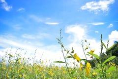 Желтые цветки, горы и красивое небо r r стоковая фотография