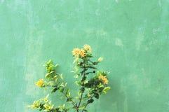 Желтые цветки и зеленая предпосылка стены стоковые фотографии rf