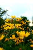 желтые цветки и зеленая трава против сини стоковые изображения rf