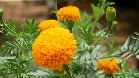 Желтые цветки летом сток-видео