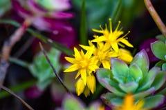Желтые цветки окружили вокруг с зеленым цветом стоковые изображения rf