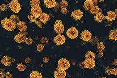 Желтые цветки сверху Стоковая Фотография
