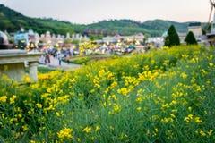 Желтые цветки с парком атракционов в предпосылке стоковые изображения rf