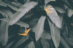Желтые цветки с штейновыми зелеными листьями стоковые фото