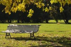 Желтые цветы, красные цветы и охры в солнечном парке осени стоковое изображение rf