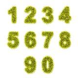 Желтые числа сусали на белизне Стоковое Изображение