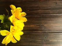 Желтые daffodils на деревянной предпосылке Стоковые Фото