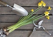 Желтые daffodils с шариками, лопаткой и ножницами стоковые изображения rf