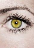 Желтый глаз - красивейший, женственно стоковые фотографии rf