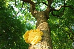 Желтый грибок Стоковая Фотография RF