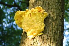 Желтый грибок Стоковое Изображение