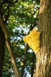 Желтый грибок Стоковые Фотографии RF