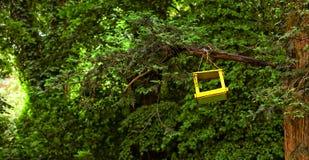 Желтый дом птицы на дереве Стоковые Фото