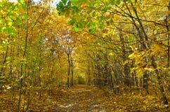 Желтый и красный цвет выходит на деревья в парк осени Стоковая Фотография