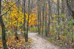 Желтый и красный цвет выходит на деревья в парк осени Стоковые Изображения RF