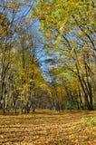 Желтый и красный цвет выходит на деревья в парк осени стоковое изображение
