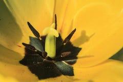 Желтый и черный на цветке стоковое фото