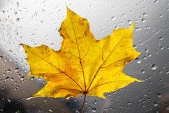 Желтый кленовый лист осени на ненастном окне Концепция сезонов падения Стоковые Фото