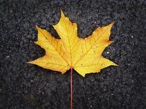 Желтый кленовый лист упал на темный асфальт Стоковая Фотография