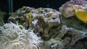 желтый клоун удит заплывание видеоматериал