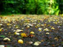 Желтый ковер Стоковые Фото