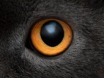 Желтый конец глаза кота вверх Стоковая Фотография RF