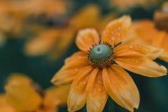 Желтый конец цветка поднимает стоковые изображения