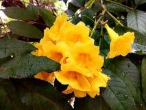 Желтый лепесток стоковые изображения rf