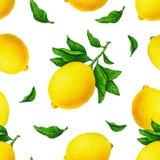 Желтый лимон приносить на ветви при зеленые листья изолированные на белой предпосылке Цвет воды рисуя безшовную картину для дизай Стоковые Изображения