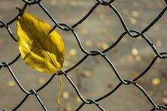 Желтый лист на решетке металла Стоковая Фотография