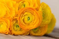 Желтый лютик closeup Стоковое фото RF
