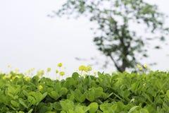 Желтый маленький цветок на предпосылке зеленой травы Стоковое фото RF