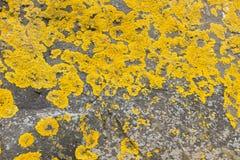 Желтый мох на камне стоковая фотография