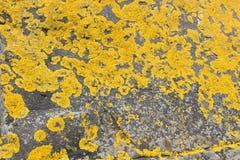 Желтый мох на камне стоковые фото