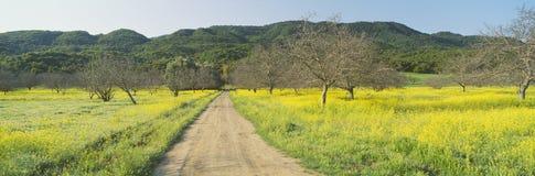 Желтый мустард Стоковые Фото