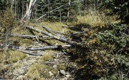 Желтый пол леса Стоковое фото RF