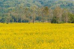 Желтый сад цветка Стоковые Фото