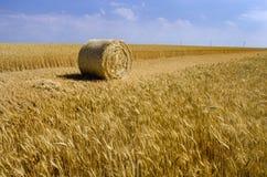 Желтый сноп сена и поля с ушами Стоковая Фотография RF