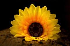 желтый солнцецвет темно ноча древесина Стоковые Изображения