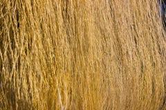 Желтый сырцовый шелк Стоковое Изображение RF