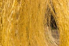 Желтый сырцовый шелк Стоковая Фотография RF