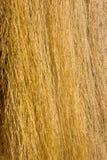 Желтый сырцовый шелк Стоковые Изображения