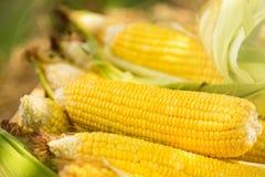 Желтый удар сладостной мозоли в деревянной коробке на поле фермы Таиланд Стоковые Изображения