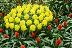 Желтый цветок вокруг красного цвета Стоковое Изображение RF