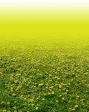 Желтый цветок в зеленой траве Стоковое Фото